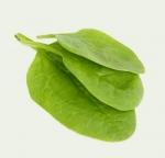 Szpinak warzywny