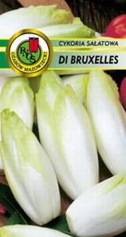 Cykoria Sałatowa Di Bruxelles