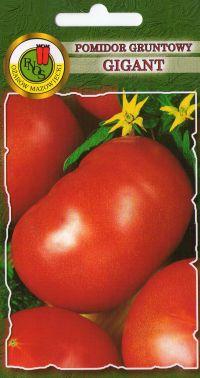 Pomidor Gruntowy Gigant