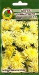 Aster chryzantemowy żółty