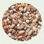 Mieszanka dla Gołębi - Dietetyczna