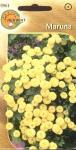 Złocień maruna Goldball
